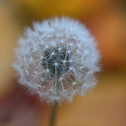 &quot;Puff&quot;<br />