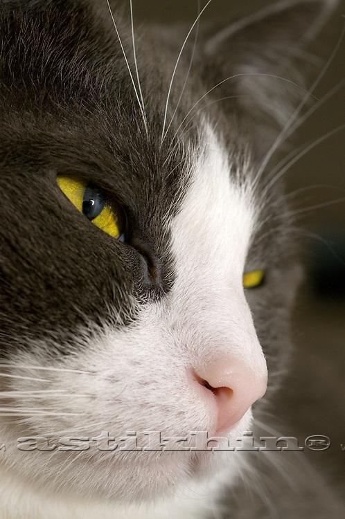 House-cat
