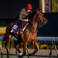 Chriselliam trains for the Breeders' Cup Juvenile Fillies Turf at Santa Anita Park in Arcadia, California on October 31, 2013. (Alex Evers/ Eclipse Sportswire)