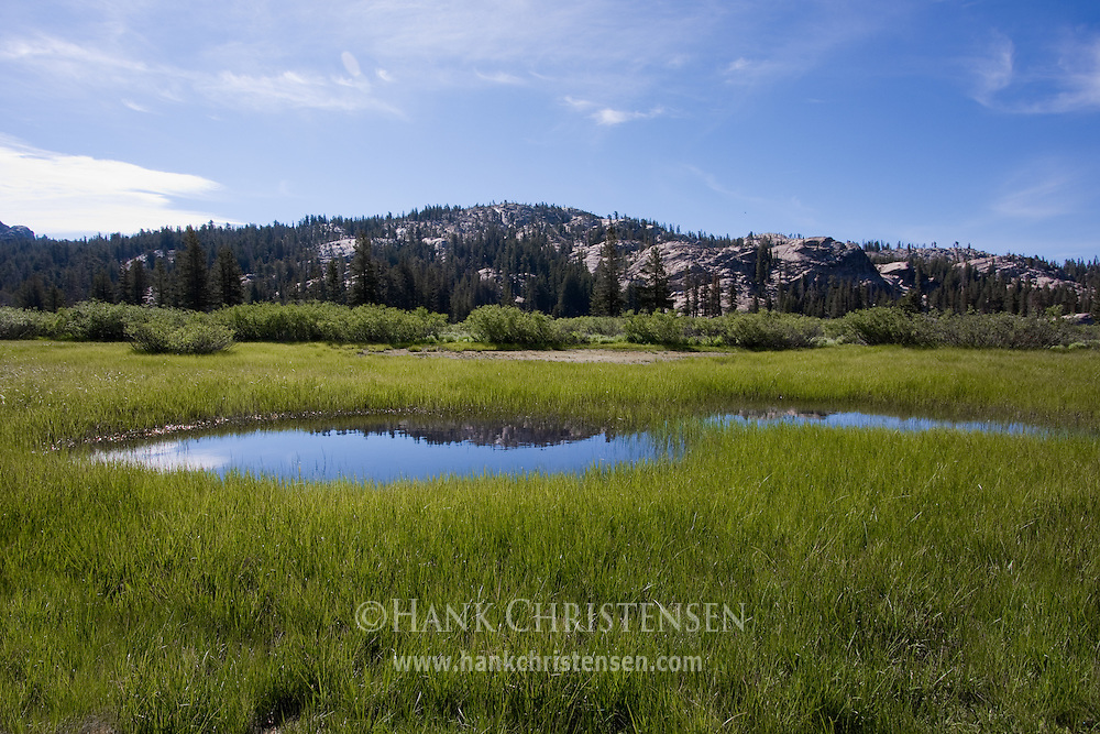 The Marsh Meadow Marshy-meadow-emigrant-17316