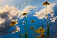 The sky is reflected in a Sierra Mountain lake behind wildflowers ?the clean air, blue water and green land that citizens want without the fire that is required to maintain it in California's fire adapted ecology.