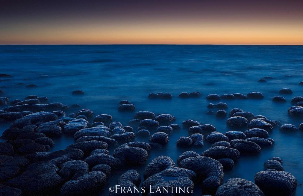 Stromatolites at twilight, Shark Bay, Western Australia