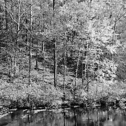 Bald River Calm Stream Fall Color Reflection - Infrared Black & White