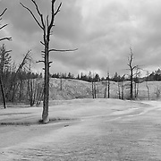 Dead Trees - Mammoth Terrace Hot Springs - Yellowstone National Park - Black & White