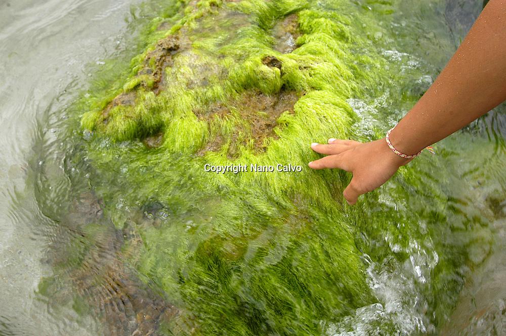 Han of a young woman touching a rock with green algaes, Aguas Blancas beach, Ibiza, Balearic Islands, Spain