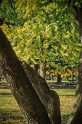 Design pattern city park tree trunks.