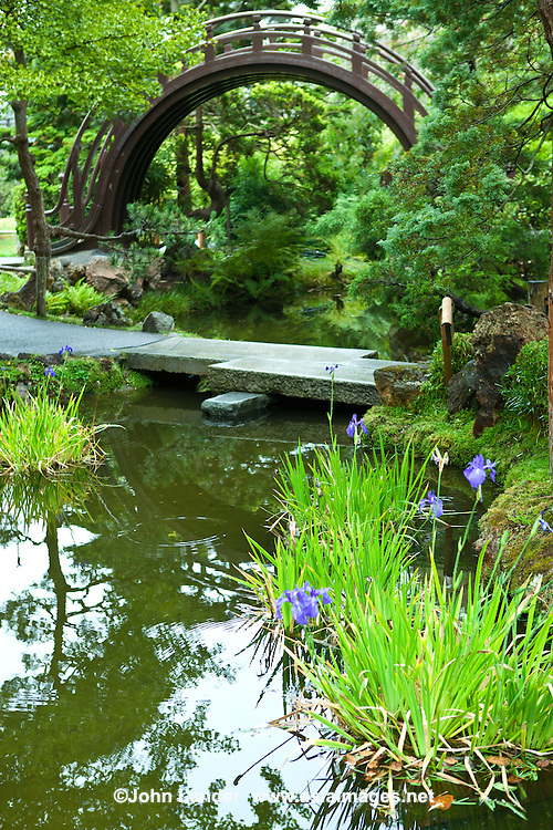 "Japanese Tea Garden Bridge - Originally created as a ""Japanese Village"" exhibit for the 1894 California Midwinter International Exposition, the Japanese Tea Garden at Golden Gate Park originally spanned about one acre. When the fair closed, Japanese landscape architect Makoto Hagiwara created a permanent Japanese garden as a gift for posterity.  Hagiwara became caretaker of the property, pouring all of his personal wealth and creative talents into creating a garden of perfection.  Hagiwara expanded the garden to its current size of approximately 5 acres. He and his family lived on the grounds for many years until 1942 when they were forced to evacuate their homes and put into internment camps. Today, the Japanese Tea Garden endures as one of the most popular attractions at Golden Gate Park, featuring an arched drum bridge, pagodas, stone lanterns, stepping stone paths, native Japanese plants, serene koi ponds and a zen garden."