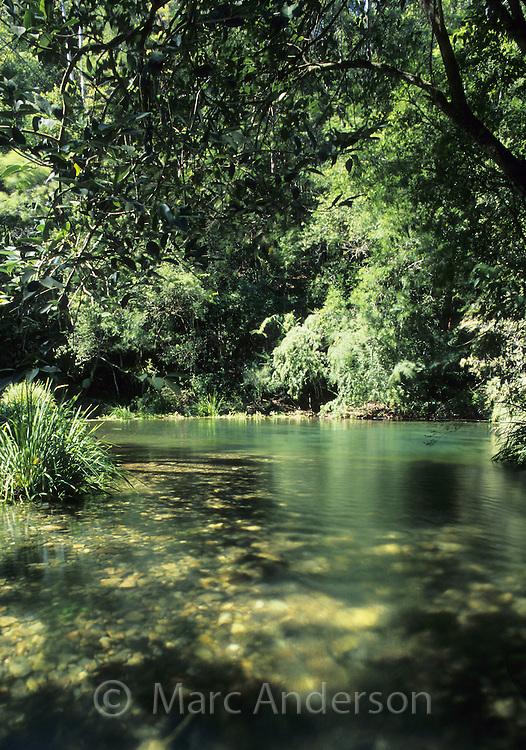 Beautiful natural pool in subtropical rainforest, Dorrigo National Park, NSW, Australia..