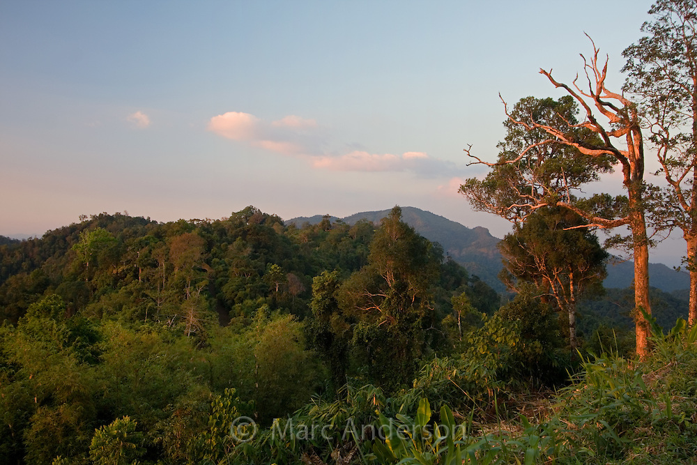 Trees and vegetation in Kaeng Krachan National Park, Thailand