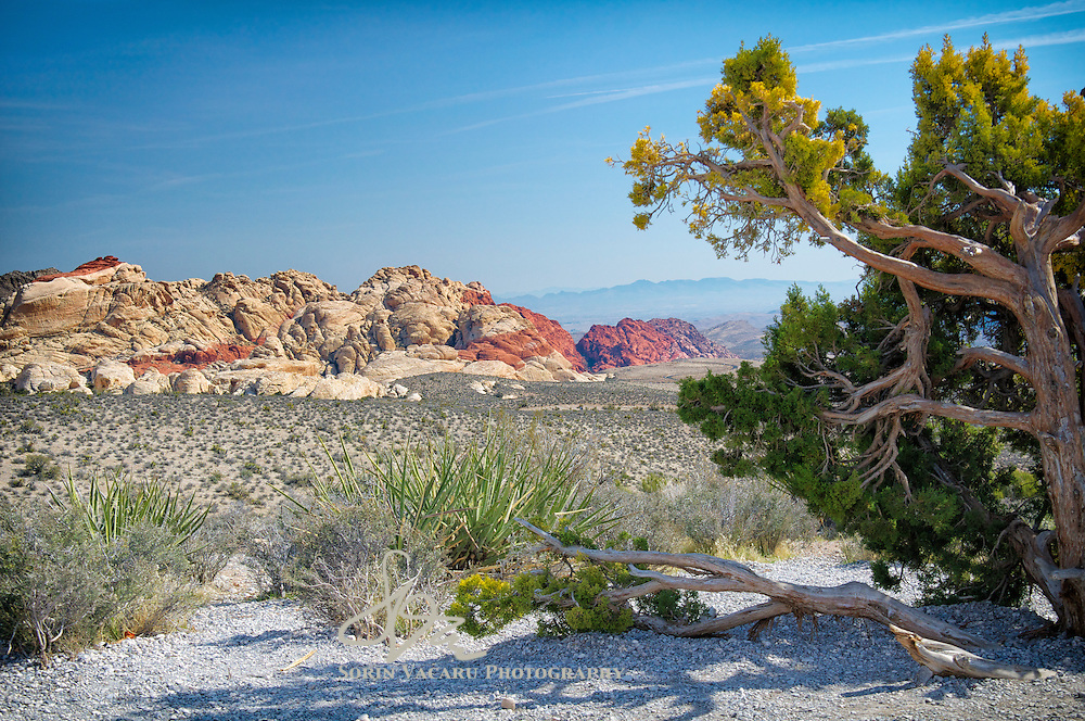 Winter afternoon in Red Rock Canyon outside Las Vegas
