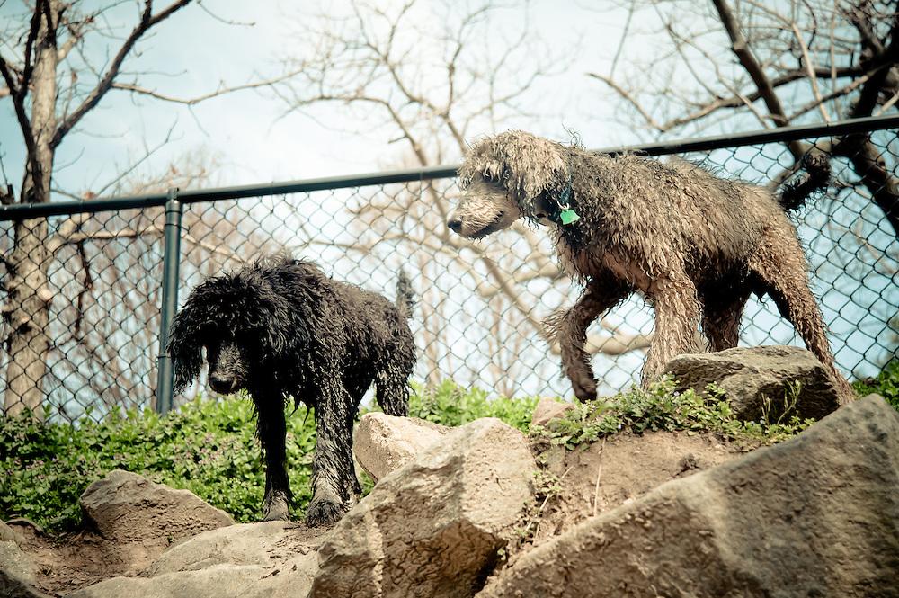 Pedro & Halo play at the Shirlington Dog Park