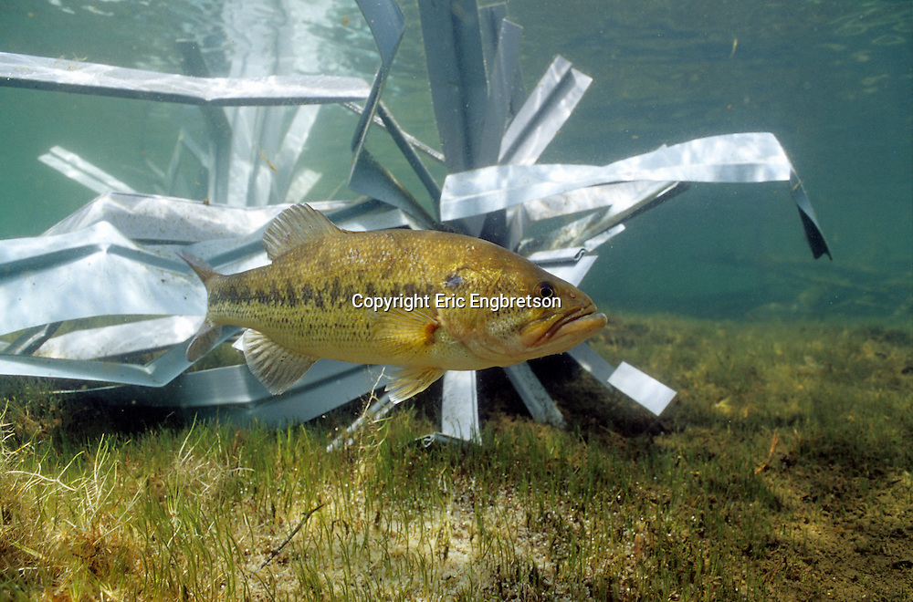 Fish hiding structure engbretson underwater photography for Artificial fish pond