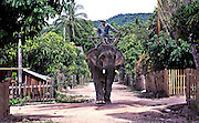 A mahout guides  his elephant to a traditional Lao Bassi ceremony held for the elephants to hold all the spirits to the animals to ensure good health  and luck in life in Viangkhet village, Hongsa, Laos.