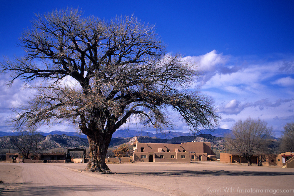 USA, New Mexico, Santa Fe. Grand dramatic tree in the center of San Ildefonso Pueblo.