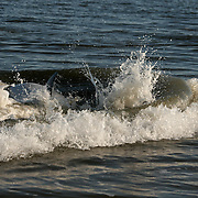 A bottle nose dolphin corralling fish in the surf off a Jekyll Island beach.