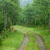 Gravel road in the mist. Glenfinnan, Scotland.