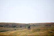 . Custer State Park, South Dakota.