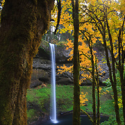 South Silver Falls, framed by golden fall color, plunges 177 feet into a canyon in Silver Falls State Park, Oregon. South Silver Falls is one of ten named waterfalls in the park.