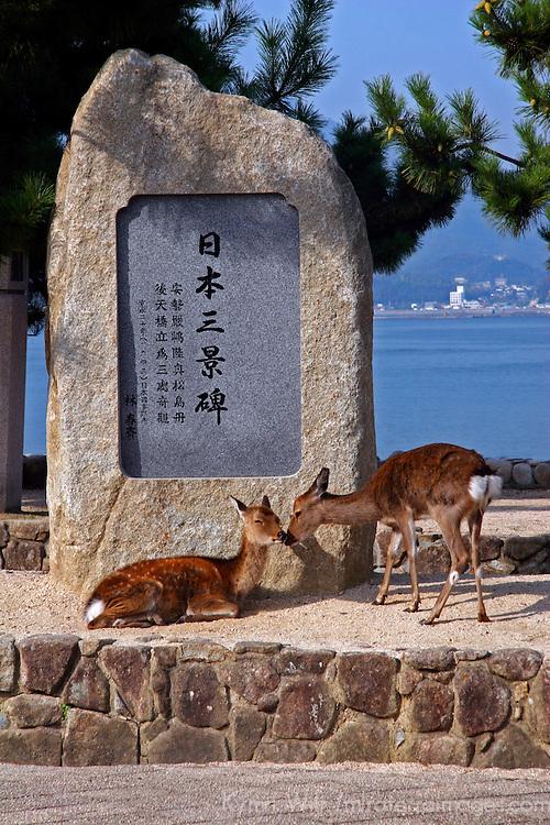 Asia, Japan, Miyajima. Deer grace the walkways along Miyajima Island toward the Itsukushima Shrine.