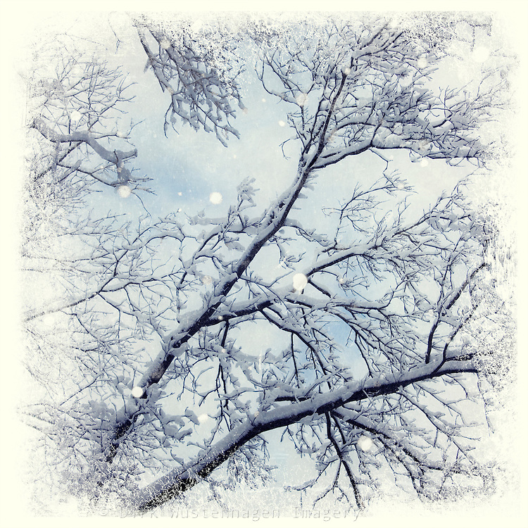 Impresionistic view of snow covered branches - textured photography<br /> <br /> Prints &amp; more: http://society6.com/DirkWuestenhagenImagery/sNOw-trEE-xxd_Print