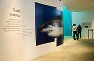 Exposición Temporal Biomuseo Tiburón gigante Camellos diminutos_VM