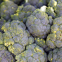 USA, California, Los Angeles. Local organic broccoli at the Hollywood Farmer's market.