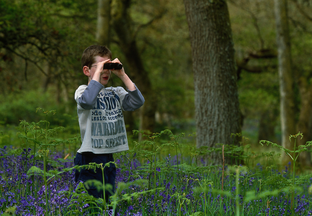 Boy, 6, birdwatching in bluebell wood, Scotland