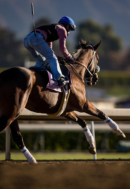 She's A Tiger trains for the Breeders' Cup Juvenile Fillies at Santa Anita Park in Arcadia, California on October 31, 2013. (Alex Evers/ Eclipse Sportswire)