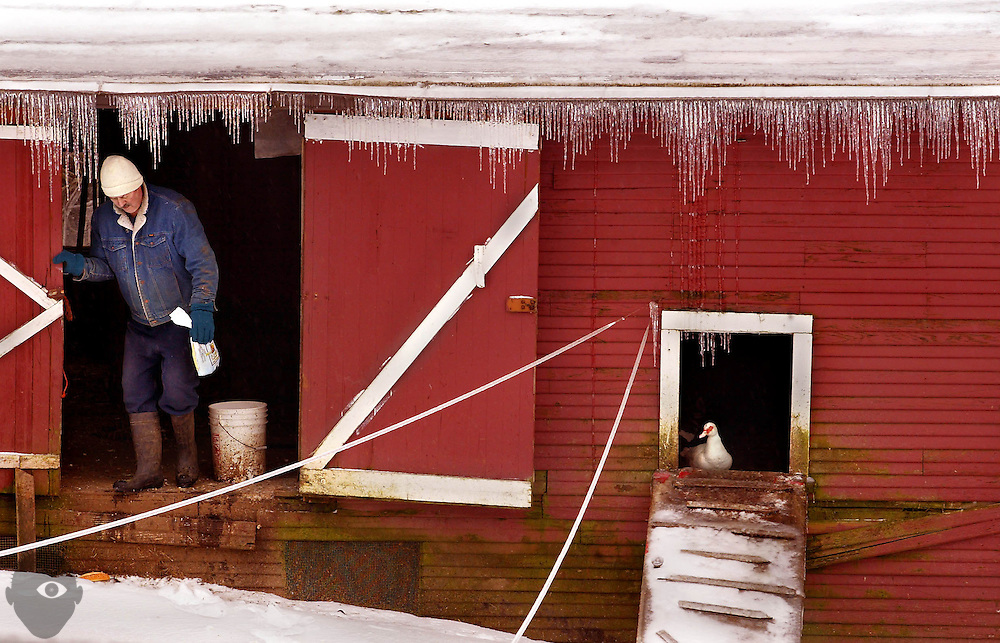 Ice abounds a small barn off of Hwy 14 near Vancouver during a winter storm with a duck not willing to brave the cold for a bite to eat.