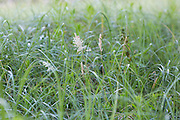 detail of tall grass and weeds