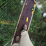 A woman walks across a canopy walkway in the rainforest canopy