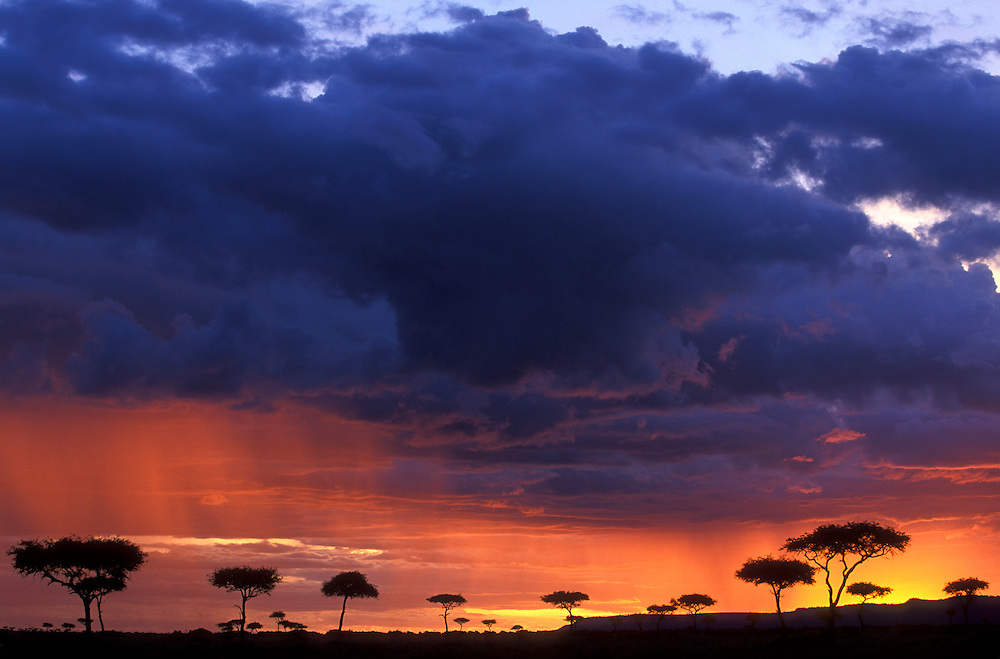 Kenya, Masai Mara Game Reserve, Setting sun lights storm clouds above savanna during October's short rains