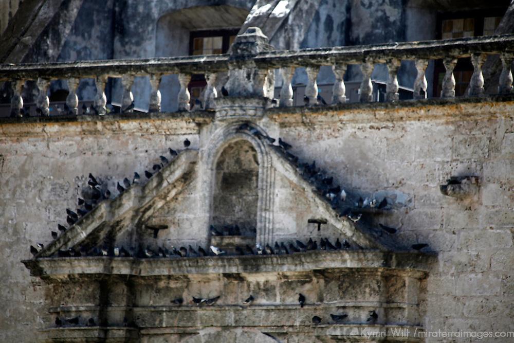 Central America, Cuba, Havana. Pigeons roosting in Old Havana.