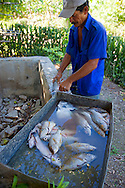 Man cleaning fish in Bariay, Holguin, Cuba.