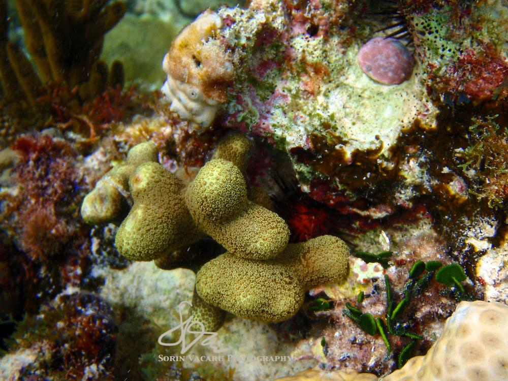 Coral reef detail