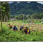 Former soldiers with the Karen National Liberation Army, all blind, all landmine victims work in a garden near the Mae Hla refugee camp along the Thai-Burma border.
