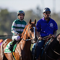 ARCADIA, CA - OCTOBER 01: Stellar Wind #5, ridden by Victor Espinoza wins the Zenyatta Stakes at Santa Anita Park on October 01, 2016 in Arcadia, California. (Photo by Alex Evers/Eclipse Sportswire/Getty Images)