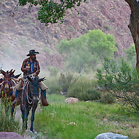 Breakfast in the Saddle the Packers depart Phantom Ranch for the South rim