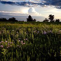 A nice summer evening on a Waushara County farm.