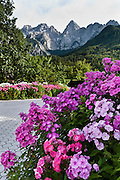 """Pink flowers bloom in a driveway beneath the Julian Alps, Slovenia, Europe. The pyramidal mountain peak of Spik (""""Spike,"""" 2472 meters/8110 feet) rises high above the town of Gozd Martuljek (""""Martuljek Forest,"""" formerly known as Rute) in the Julian Alps, in Kranjska Gora municipality in the Upper Carniola region, Slovenia. To the left (southeast) of Spik rises a higher summit, Oltar (2621 m), also within Triglav National Park (in Slovene: Triglavski narodni park, TNP). Historically, four linguistic and cultural groups of Europe have met in Slovenia: Slavic, Germanic, Romance, and Uralic. In 1991, Slovenia declared full sovereignty from Yugoslavia. In the 2002 census, 83% considered themselves Slovenes. Today, Slovenia is a member of the European Union, the Eurozone, the Schengen area, NATO and OECD. Per capita, Slovenia is the richest Slavic nation-state."""