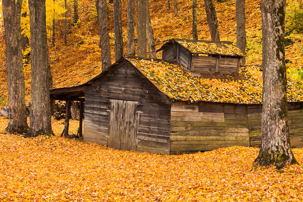 autumn foliage and rustic sugar house in Mendon, Vermont