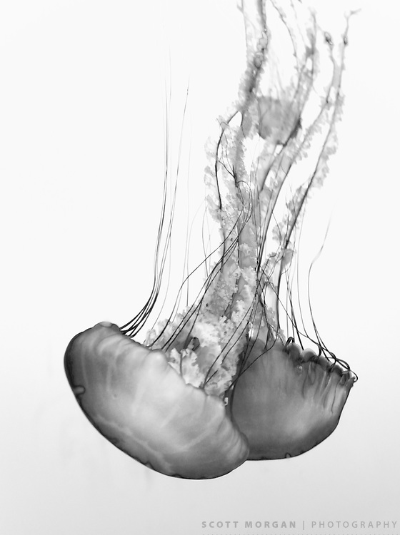 Scott Morgan Photography 2010<br />