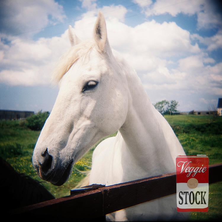 A white horse, Co. Clare, Ireland, May 2008.