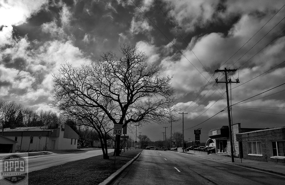 Oak tree on Park Street in Madison, Wisconsin Tuesday, March 28, 2017.