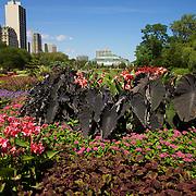 Wide-angle photo by Leandra of the Lincoln Park botanical gardens with building in background.