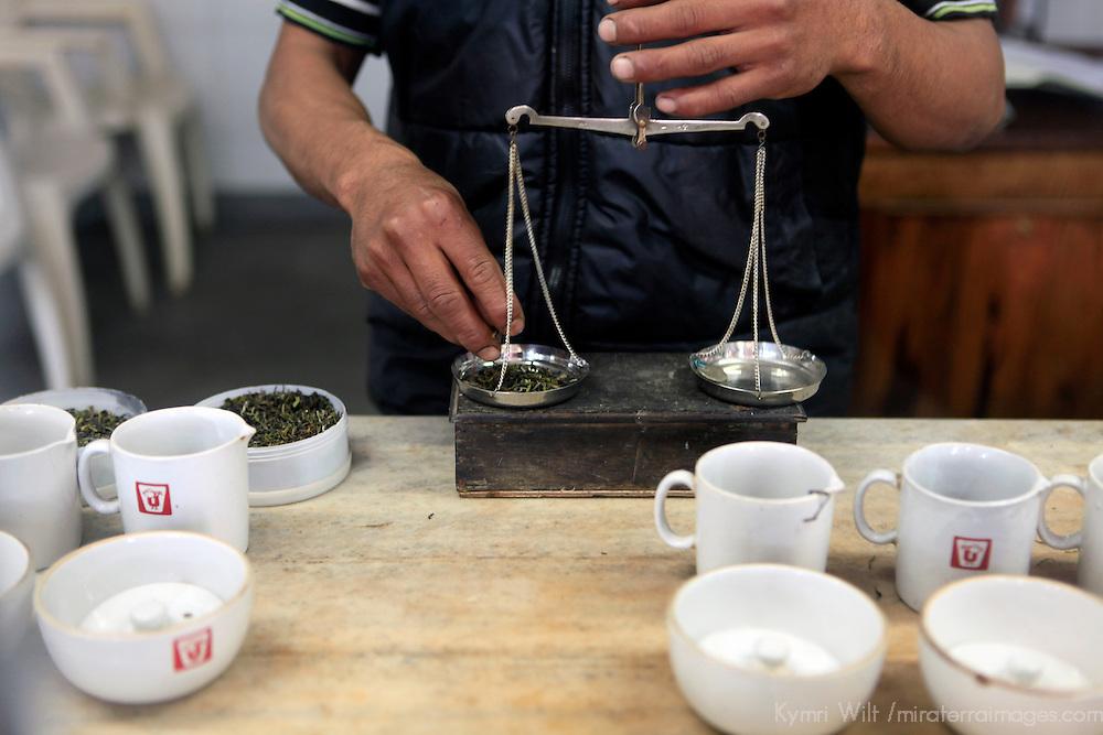 Asia, India, Darjeeling. Scales used to measure precise servings of Darjeeling tea tasting.