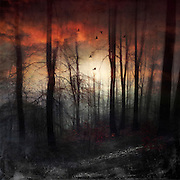 Dark and moody forest scenery at sunset