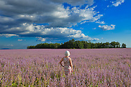 Woman standing in flower field near Valensole, , Provence,France, Europe,Model released 350