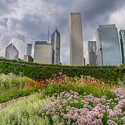 Lurie Garden in Millennium Park, Chicago. Photo by Alabastro Photography.