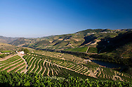 Symington Family Estates - Quinta dos Malvedos vineyards